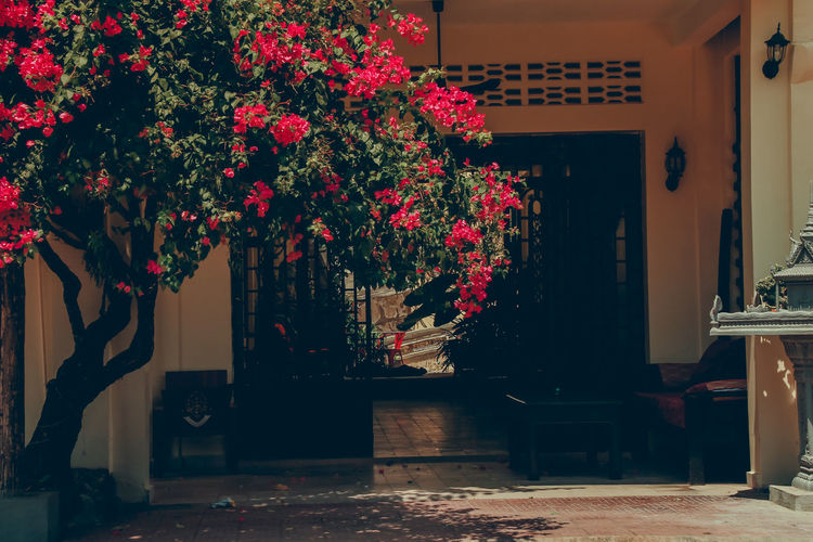 Red and potted plants on table by building