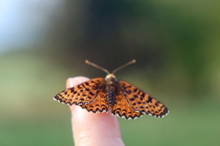Close-up of butterfly on hand