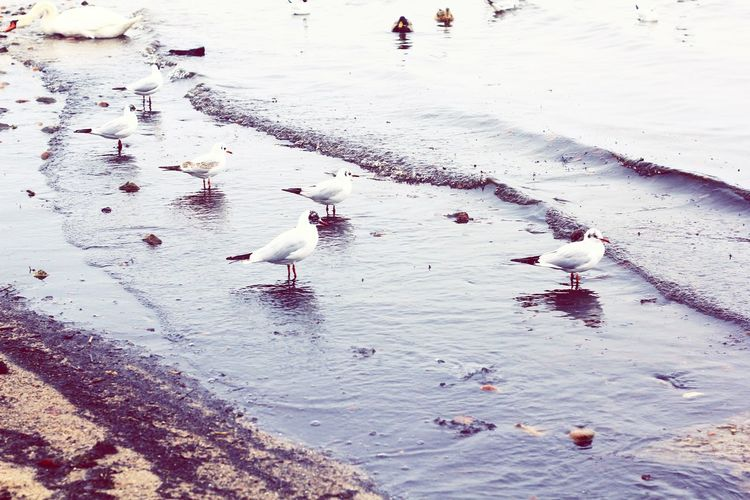 Seagulls Nature_collection Nature Eyem Best Shots Baltic Sea Gdynia Orłowo Landscape Beach