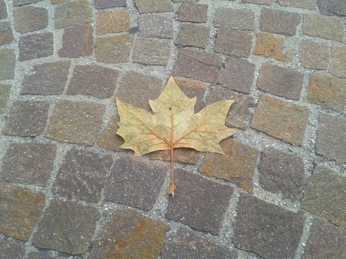 Autumn Colour Of Autumm Detail Leaf Leaf 🍂 Paving Stone Pride Proud Leaf