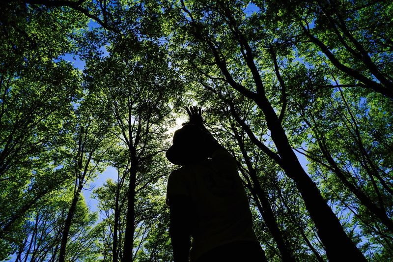 Live For The Story 。 Low Angle View Nature Forest Outdoors One Person Hello World FUKUSHIMA Enjoying Life Gleen Eye For Photography A forest changes a person
