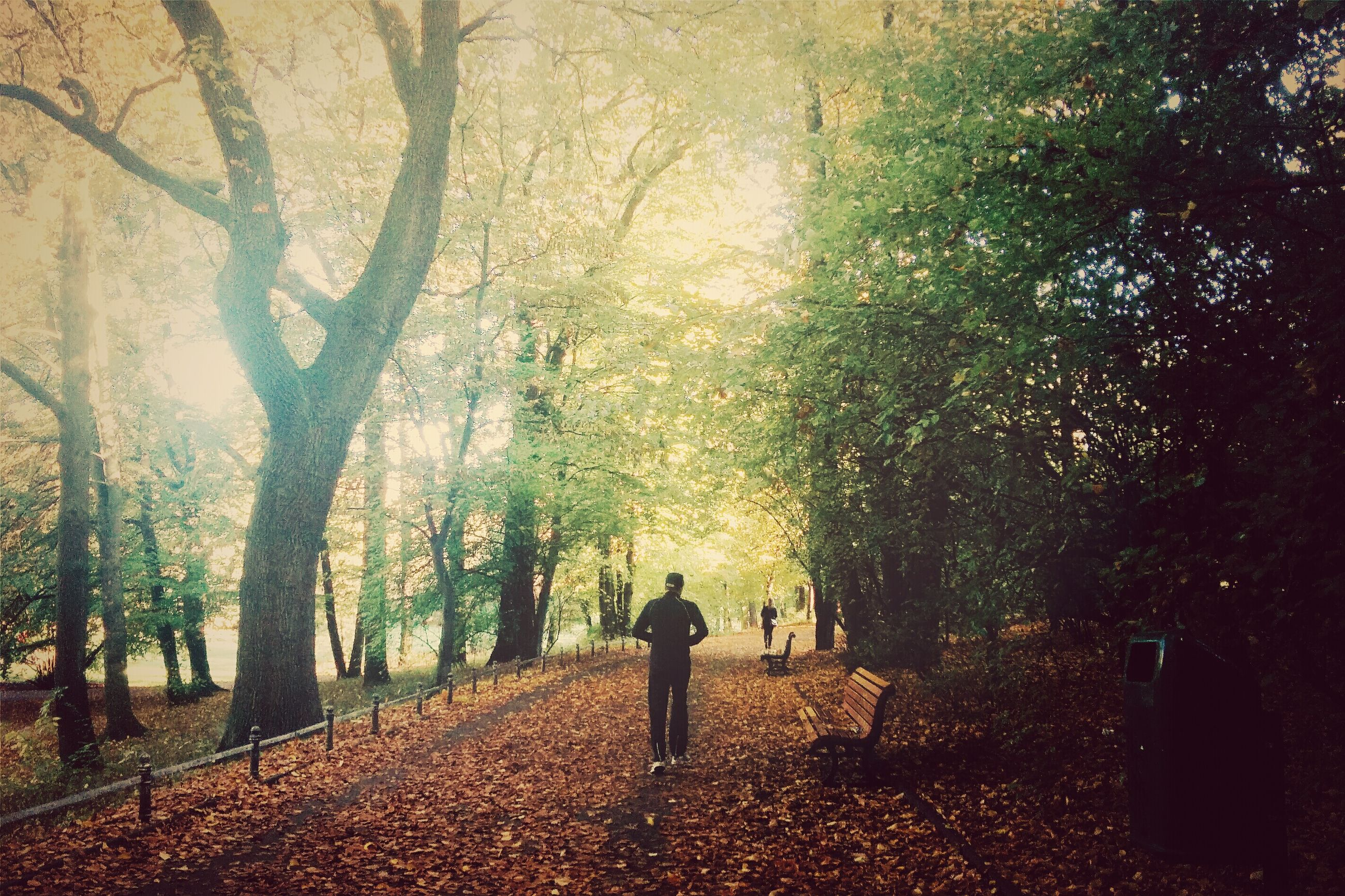 tree, lifestyles, walking, leisure activity, men, autumn, rear view, growth, nature, person, change, tree trunk, full length, standing, leaf, footpath, season, outdoors