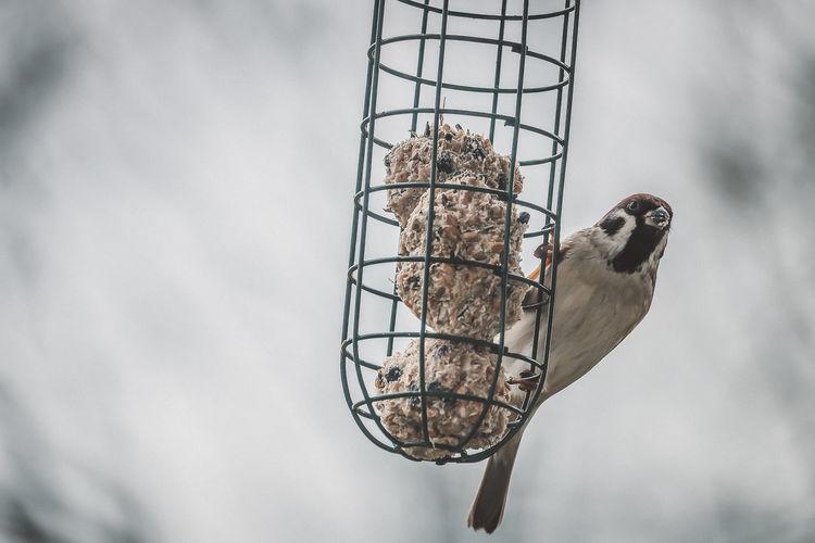 sparrow at bird