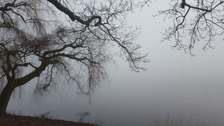 Alster Außenalster Germany🇩🇪 Hamburg Hamburg City January Winter Fog Außenalster Beauty In Nature Foggy Foggy Day Germany Lake Lake View Mystical Atmosphere Nature No People Outdoors Peaceful Peaceful And Quiet Silence Of Nature Bare Tree Tranquility Branch Tranquil Scene Tree Scenics Water Fog Landscape