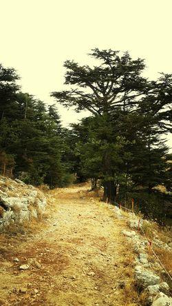 Cedars Hiking Taking Photos