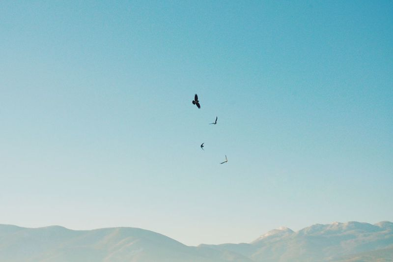 Low angle view of silhouette birds flying over mountains against clear blue sky