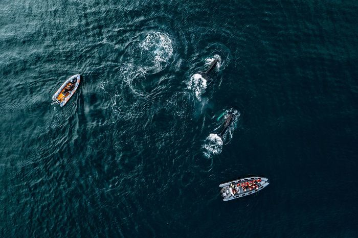 Aerial view of killer whale swimming by boats in sea