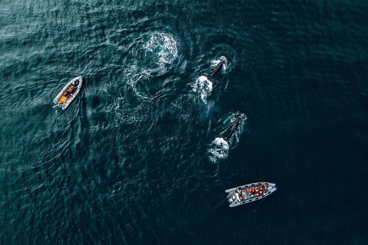 Whales from above in Iceland The Great Outdoors - 2018 EyeEm Awards Day Group Of People High Angle View Leisure Activity Lifestyles Mode Of Transportation Motion Nature Nautical Vessel Outdoors People Real People Sea Sport Swimming Transportation Unrecognizable Person Water Waterfront