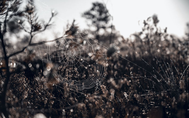 Spiderweb in the swamps