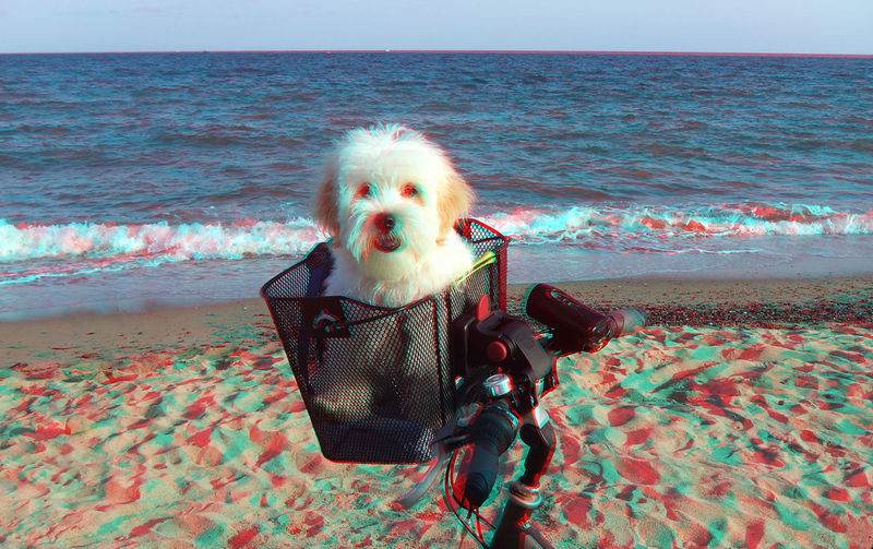 3D Photo 3d Visualize With Anaglyph Glasses Beach Beauty In Nature Day Horizon Over Water Nature Outdoors Sea Sky Water