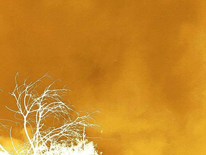 Low angle view of bare tree against orange sky