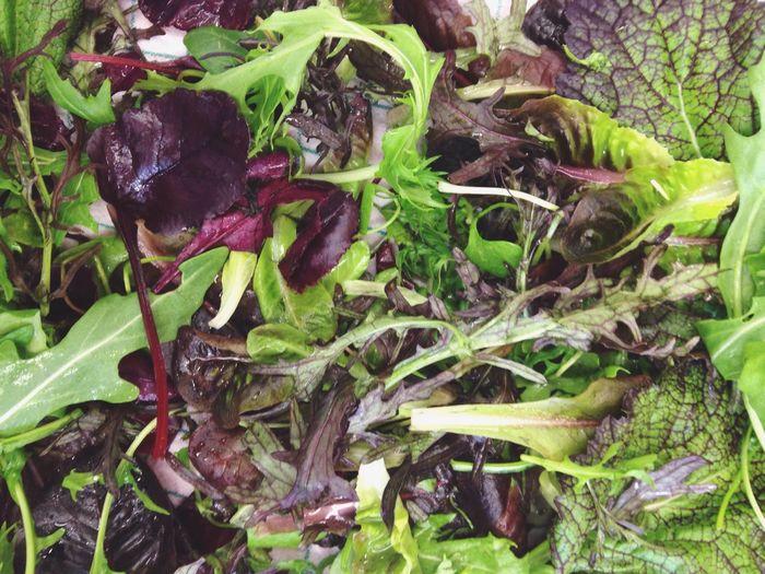 Vegetable Healthy Eating Food Green Color Leaf Salad Freshness Asia Salad Green Vegetarian Directly Above Close-up Lettuce
