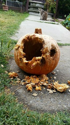 Pumpkin Halloween Destruction Rotting Nature Nature_collection