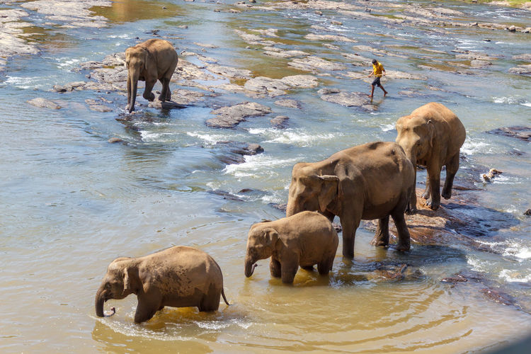 High angle view of elephant drinking water in lake