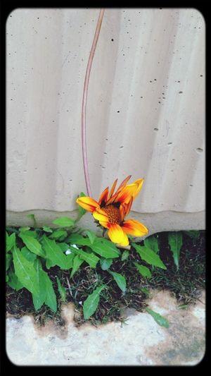 Flower Cute Hello World Misurata
