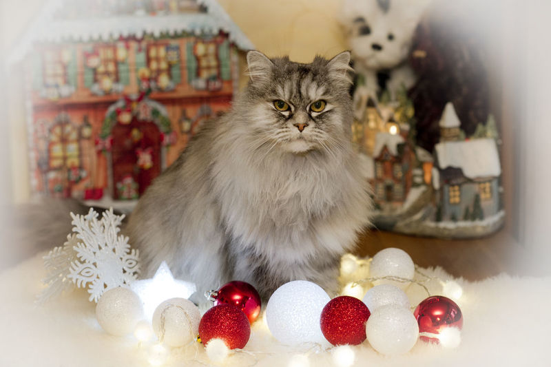 View of cat with christmas decorations