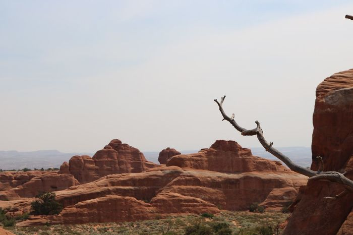 Scenic Arches National Par Animal Themes Arid Climate Beauty In Nature Clear Sky Cliff Day Dead Tree Desert Landscape Low Angle View Mountain Nature No People Outdoors Physical Geography Rock - Object Rock Formation Scenics Sky Tranquil Scene Tranquility Travel Destinations
