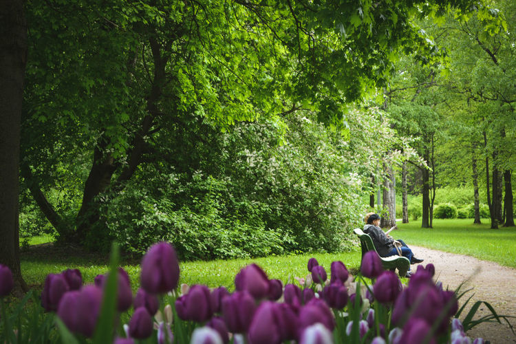 Tree Green City Saint Petersburg People Street Atmosphere Summer Summertime Shadow Day Flowers Blossom Tulips Relax Grass