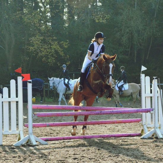 Showjumping Equestrian Horse Championship