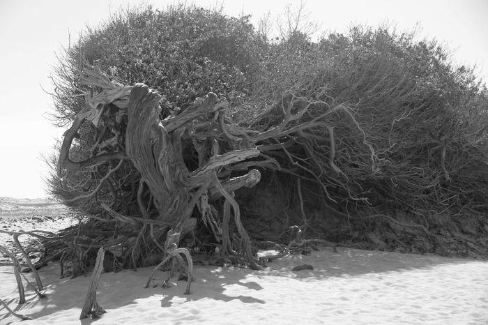 Branch Brazil Ceará Jericoacoara Jericoacoara - CE Landscape Nature No People Outdoors Resilience  Resiliencia Tree