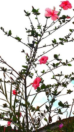 Flower Branch Nature Blossom Beauty In Nature Growth Petal Tree Pink Color No People Springtime Low Angle View Fragility Freshness Plant Outdoors Day Sky Flower Head Green Nature Grandmas Garden Grandmothersgarden Flowers 🌸🌸🌸 Flowerlovers Plant