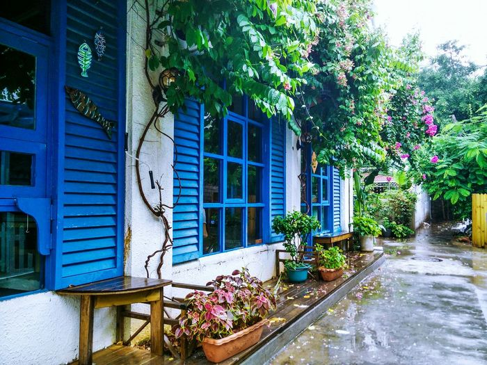 House Window Plant Flower Outdoors Blue No People Built Structure Raining Hello Hanging Out Hello World EyeEm Best Shots Enjoying Life EyeEm Gallery EyeEm Eyeemphoto Street Check This Out Hi! Taking Photos Footpath Color Palette My Favorite Place Streetphotography