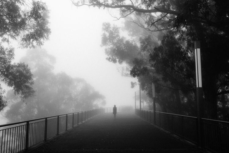 The Ghost Beauty In Nature Black & White Black And White Blackandwhite Creepy Day Fog Foggy Foggy Day Foggy Morning Madeira Mist Nature One Person Outdoors Path People Perspective Real People Silhouette Sky The Way Forward Tree Trees Waiting