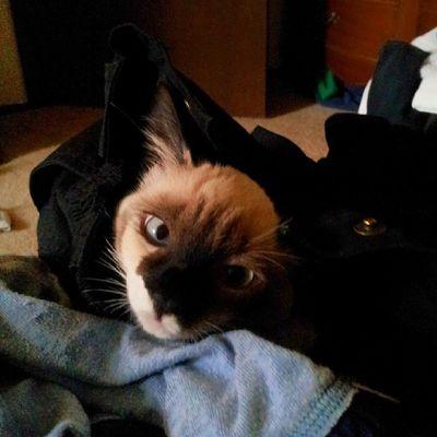 Hi...I like to burrow in the clean laundry. ..... AryaKitty WhatDoWeSayToDeath ? NotToday !