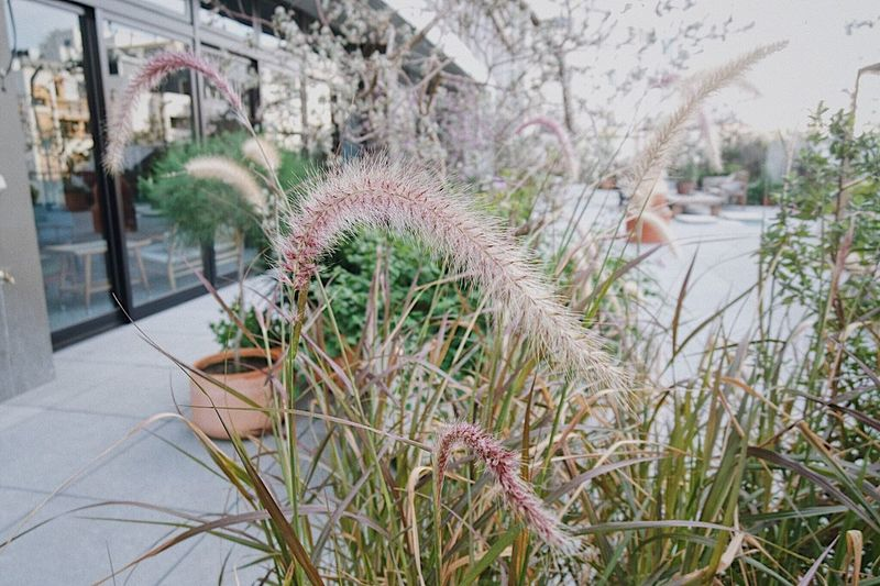 Daily Hsin Taiwan Tainan Plant Nature Day Growth Grass Tree Outdoors Flowering Plant Flower Beauty In Nature