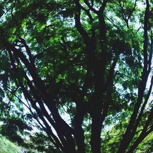 Primaverando ❤ Verde Nature Natureza