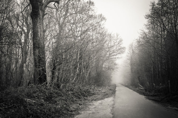 Forest, Saint-Germain-en-Laye Tree Direction The Way Forward Outdoors WoodLand Nature Forest Diminishing Perspective Mist Fog Foggy Morning Morning Light Light And Shadow Road Quiet Beauty In Nature Tranquility Europe France Bare Tree