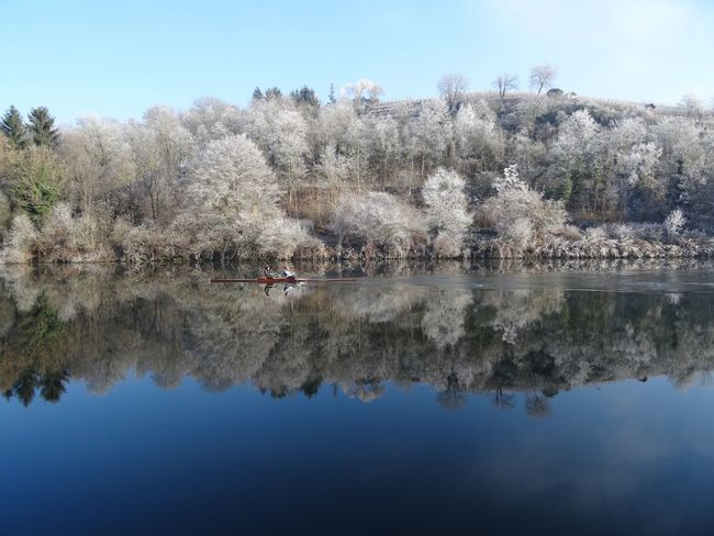 Reflection Water Tree Nature Waterfront Scenics Lake Outdoors Winter Sport Growth Day Beauty In Nature Swimming White Frost Snow Cold Temperature Standing Water Symmetry Winter Wonderland Neckar River Mirror Kayaking In Nature Sport Germany Rowing