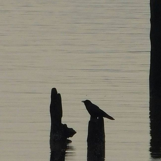 Peace ______________________________________ Birds Birdsofinstagram River Newjersey Sunset Nofilter Photographer Natgeo Capture Nikon Nikonphotography Igers Iger Shadow Silhouettes Explore Nature Naturelovers Calm Photography