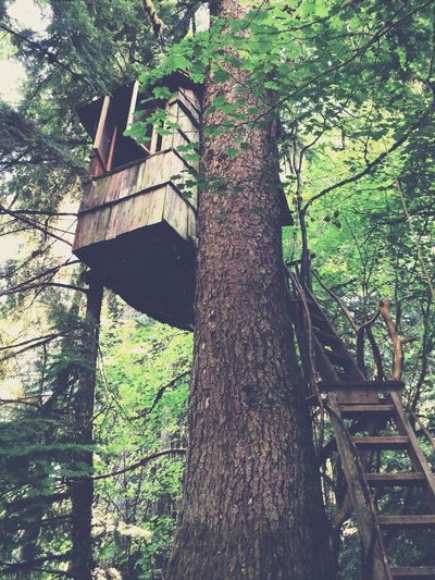 Super cool treehouse On The Road Look Up And Thrive Architecture