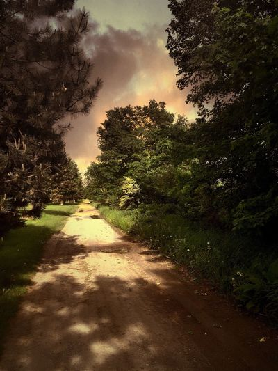 Two Tracks Country Road Tree Nature Sky No People Sunlight Tranquility Beauty In Nature Outdoors Scenics Nature Photography Pure Michigan Fresh Air...