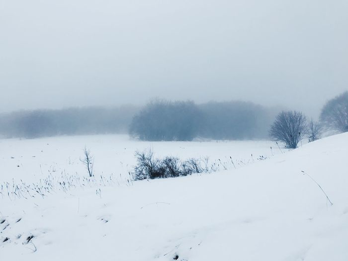 Fog EyeEm Selects Winter Cold Temperature Snow Beauty In Nature Tree Sky White Color Environment