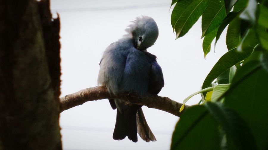 Taking Photos Enjoying The Sights Blue Jay Trinidad And Tobago Port Of Spain