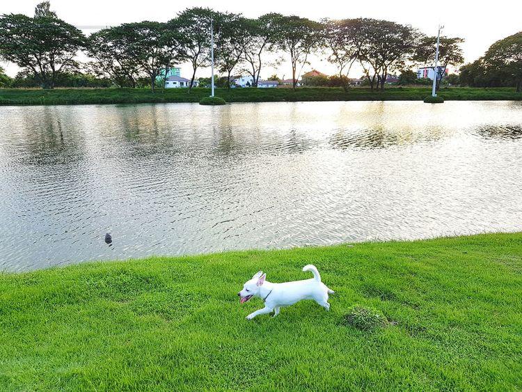 Dog Running Mahidol University Lovely Relaxing