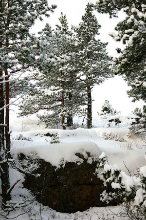 January Showcase: January Snow Covered Cold Winter ❄⛄ My Winter Favorites Nature Photography Winter 2016 Nature_ Collection  Winter Forest Winter Trees Snowy Trees Snow Covered Branch Winter_collection Winter Season Cold And Frosty Wintertime Nature_collection Finland