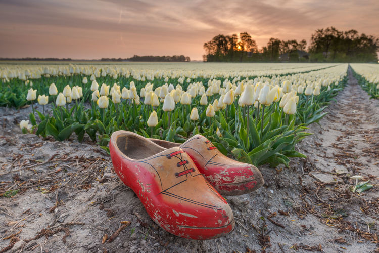 Close-up of shoes on field by sea against sky during sunset