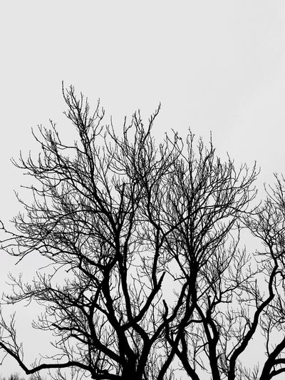 A tree and it's bare. Nature_collection Isolated ForTheLoveOfPhotography Getting Inspired Capture The Moment Popular Photos The Week On EyeEm EyeEmNewHere Eye4photography  Copy Space Blank Cloud Rural Scene Backgrounds Cold Temperature Winter Blackandwhite White Background Dull Low Angle View Branch Tree Sky Clear Sky Nature No People Bare Tree Outdoors Beauty In Nature Growth