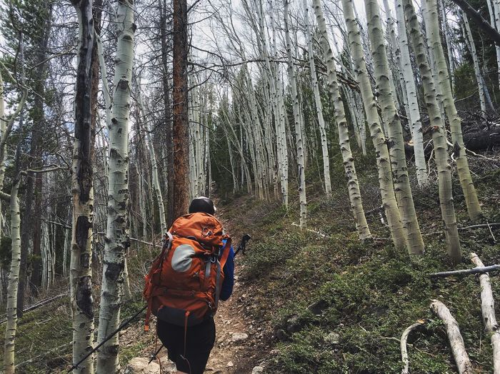 Rear View Of Man With Backpack Hiking Amidst Bare Trees In Forest