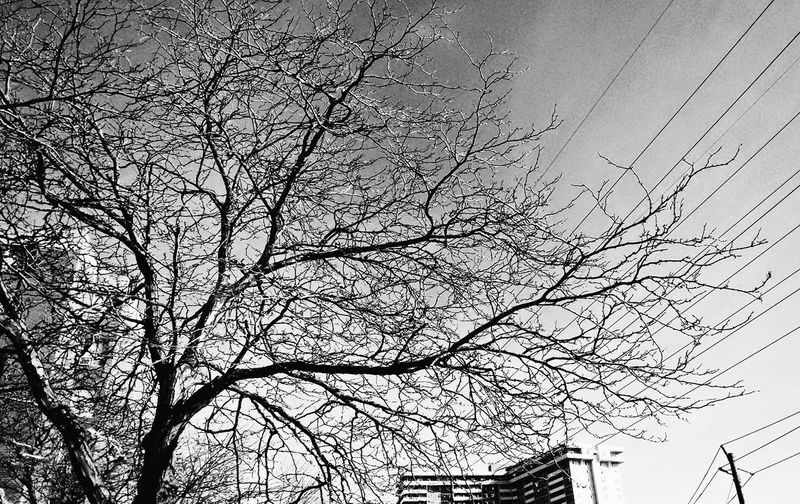 The winter affair Wintercoming Winter Trees Tree Trees Leafless Leaflesstree Tree And Sky Taking Photos Walking Around Toronto Mobile Photography Viewpoint EyeEm Gallery From My Point Of View EyeEm Best Shots Motorola Photography Eyeemphotography EyeEm Live_in_reality Lookingup Outside Black&white Black & White Black And White Learn & Shoot: Simplicity