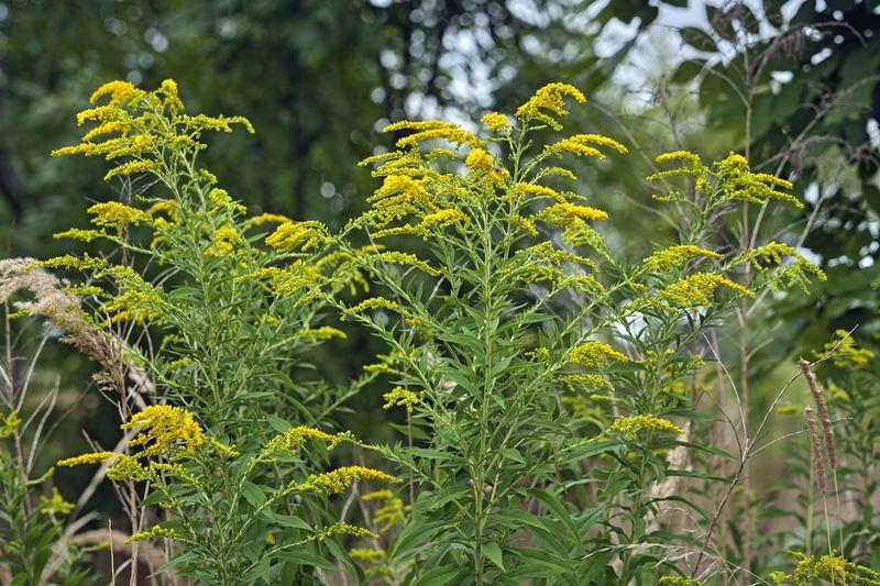 Close-up of fresh yellow plants