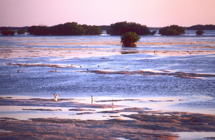Shallow Water Lagoon Mangrove Caribbean Sea Nature Water Beauty In Nature Sunset Scenics Beach Tranquility Outdoors No People Tranquil Scene Silhouette Wave Sand Bird Tree Landscape Day Sky Animal Themes