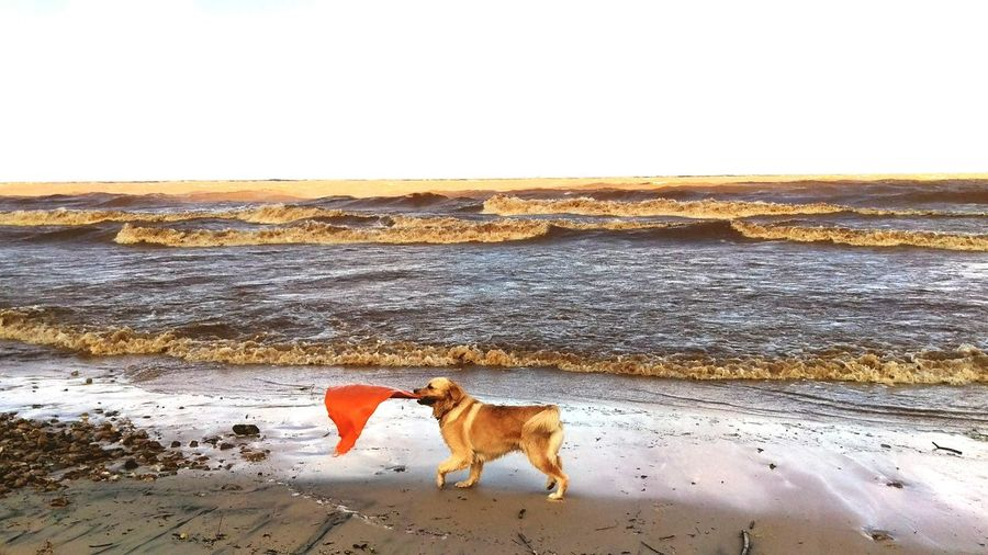 Red flag for today Taking Photos Hello World Enjoying Life Colours Life Is A Beach Uruguay Lifestyle Sea Play With The Earth Red Golden Retriever