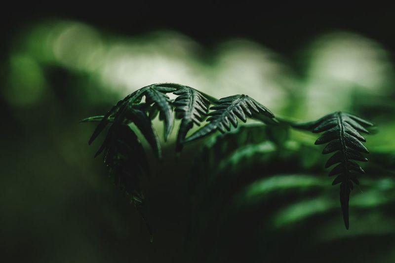 Moody Nature