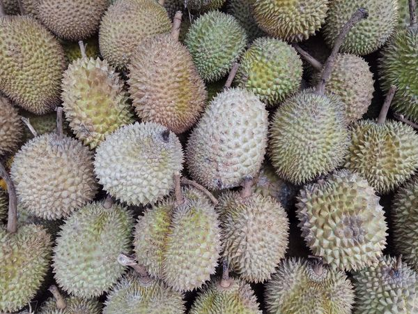 Cactus Thorn Barrel Cactus Spiked Growth Plant Nature Outdoors Full Frame No People Day Prickly Pear Cactus Close-up Backgrounds Arid Climate Beauty In Nature Durians Durian Fruit Durian Beauty In Nature Food Freshness Fruit Healthy Eating
