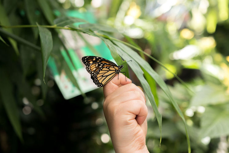 Animal Wing Animals In The Wild Beauty In Nature Butterfly Butterfly - Insect Close-up Focus On Foreground Green Color Holding Human Finger Insect Nature One Animal Outdoors Perching Person Wildlife Zoology