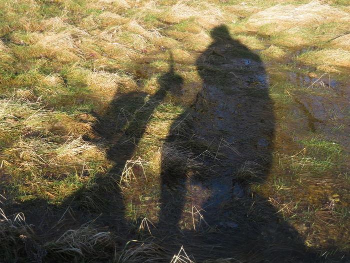 Sunlight Reflection Shadow Grass My Best Photo